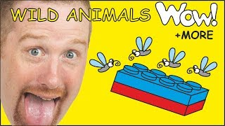 Wild Animals for Kids + MORE English Stories for Children with Steve and Maggie | Wow English TV