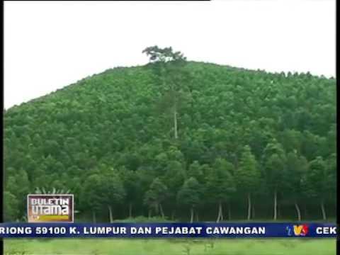 Pokok Gaharu in English Tentang Pokok Gaharu Tv3