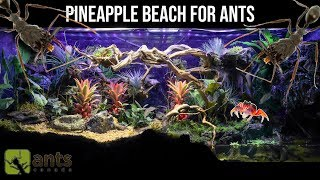 I Created a Pineapple Beach Vivarium for Ants | Super Relaxing Video