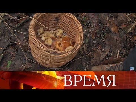 Аномально теплая погода привела к тому, что россияне в январе собирают грибы и любуются на цветы.