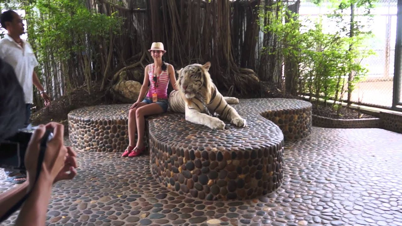 Photo with white roaring tiger (The Million Years Stone ...
