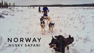 Norway: amazing husky safari and aurora experience