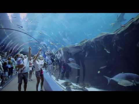 New Exhibits at the Georgia Aquarium - Sea Lions, Dolphin Celebration