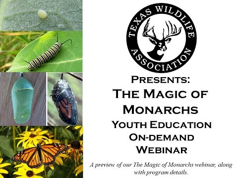 The Magic of Monarchs On-demand Youth Webinar preview