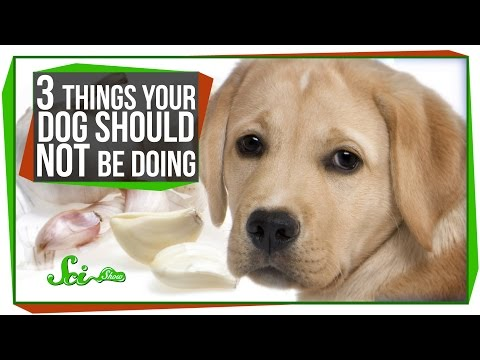 3 Things Your Dog Should Not Be Doing video