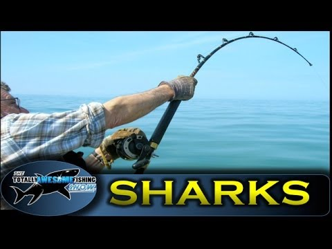 BIG SHARK Fishing from Small Boats - TAFishing Show