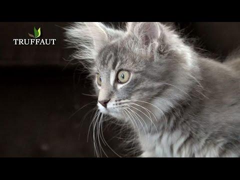Comment s'occuper d'un chaton ? - Jardinerie Truffaut TV