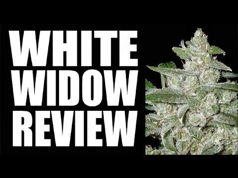 WHITE WIDOW | STRAIN REVIEW