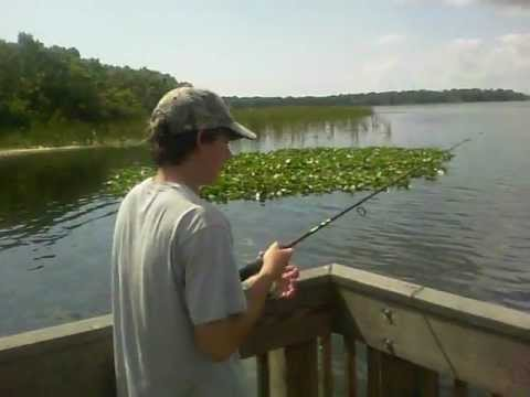 Quick reels fishing lake tarpon fl youtube for Lake tarpon fishing
