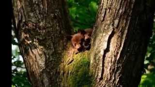 Watch Kirsty Hawkshaw Nature