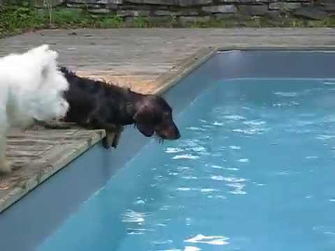Can't keep Tucker out of the pool!