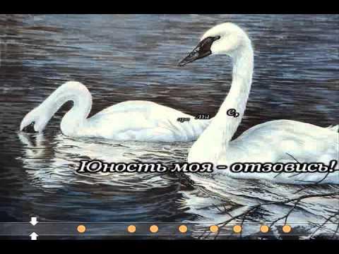 Белый лебедь на берегу озера, фото 23145844, снято 11 июня 2011 г (c) николай голицынский / фотобанк лори