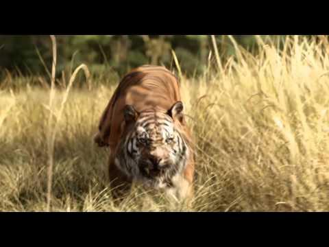 Trailer Legendado Oficial Mogli - O Menino Lobo - 14 de abril nos cinemas thumbnail