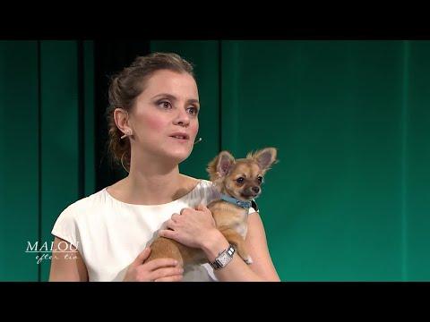 Hjärnforskaren: Så påverkas du av att ha hund - Malou Efter tio (TV4)