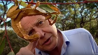 Life of Insects | Attenborough: Life in the Undergrowth | BBC Earth