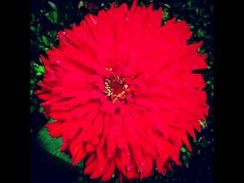 #flowers #flora #plants #nature #natural #white #pink #white #garden #beautiful #love #summer #flo