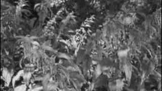 Ночные снайперы - Пух