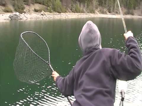 Rainbow Trout Fly Fishing in BC
