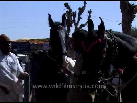 Pushkar Cattle Fair Horse