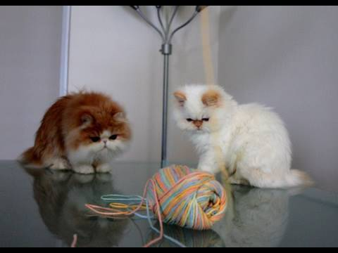 Kitties vs. Yarn