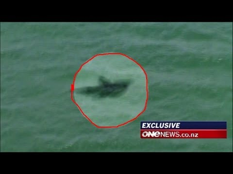Megalodon Shark Caught on Tape by Helicopter (Amazing Footage!!)