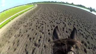 In the Slips Jockey Cam: Palm Meadows Training Center, Galloping in HD
