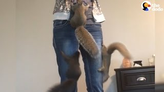 Squirrels Found Without Their Mom Get The Perfect New Family