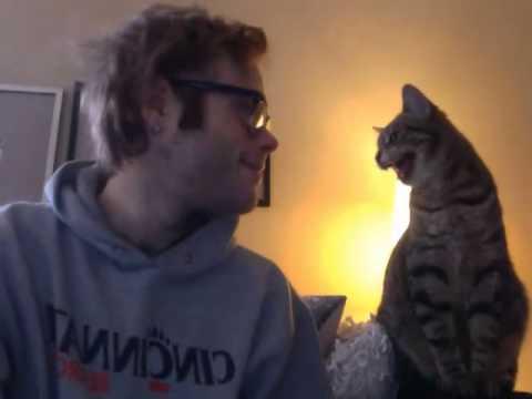 コンビ結成?!「にゃんでやね~ん!」男性にツッコミを入れる猫