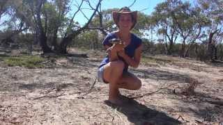 Amy Wild Adventures: A Night in the Wheatbelt (Easter Special)