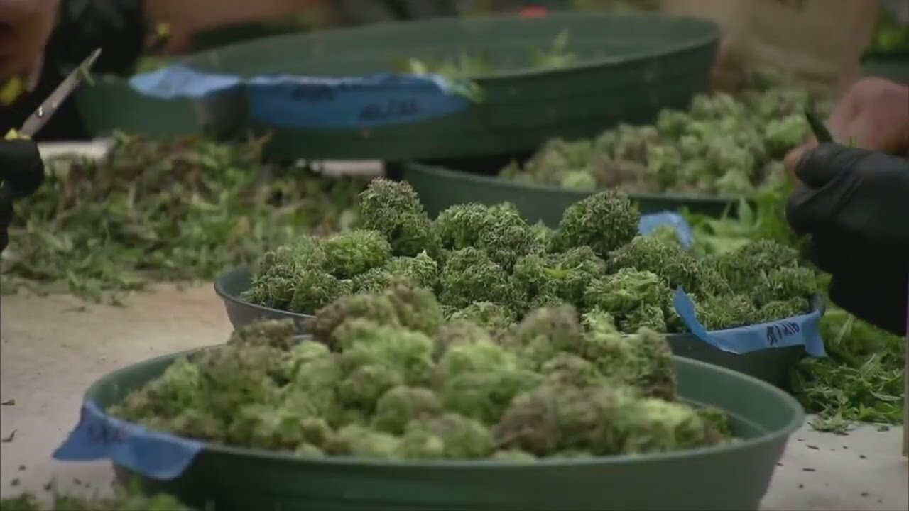The latest on Nevada's Question 2 to legalize recreational marijuana