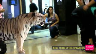 Reshma Zaveri Face To Face With The Tigers Of The Sundarbans