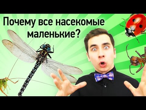 Почему все насекомые маленькие?