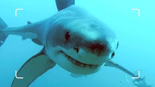 Why Are The World's Largest Sharks Disappearing? | African Shark Safari