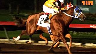 Harems Last Dash AQHA Stallion