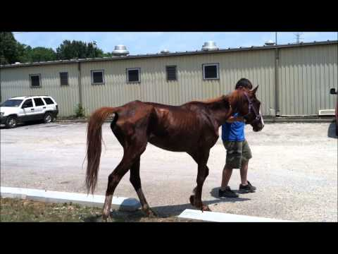 The Most Amazing Horse Starvation Rescue You May Ever See video