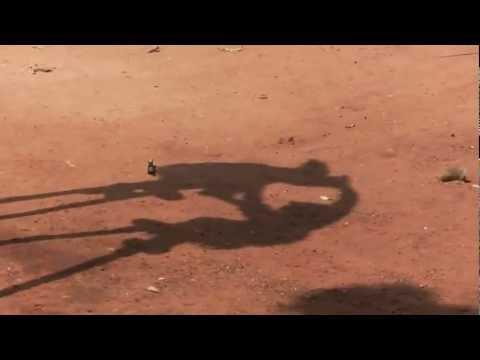 Togo... Travel memories, stilt dancers (Tchébé tradition)