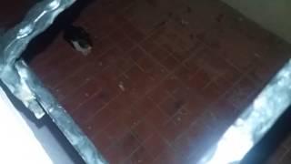 Sokak kedisi nasıl evcilleştirilir ( yeni kedim )