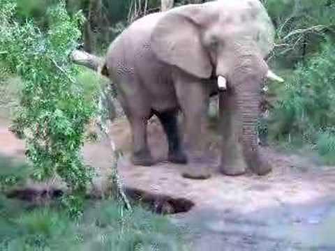 olifant komt dichtbij