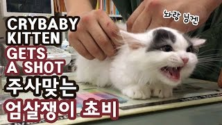 CRYBABY KITTEN GETS A SHOT