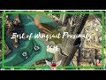 Best of Wingsuit Proximity Flying 2014