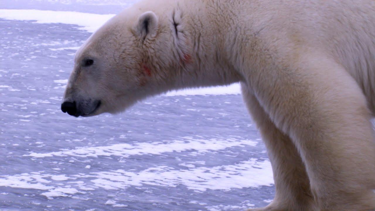 Bear attack last photo Southeastern Outdoors - Fatal Black Bear Attacks