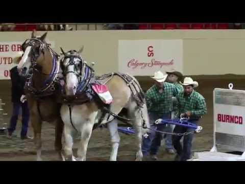Heavy Horse Pull - Calgary Stampede 2015