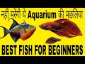 नहीं मरेंगी ये Aquarium की मछलिया|BEST FISH FOR BEGINNERS|