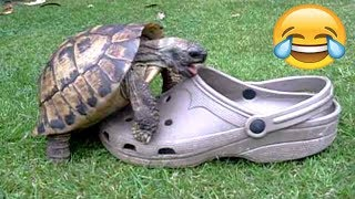 FUNNIEST TURTLES - Cute And Funny Turtle / Tortoise Videos Compilation [BEST OF ????]