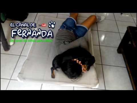 Escenas fuertes ataque perro a niña
