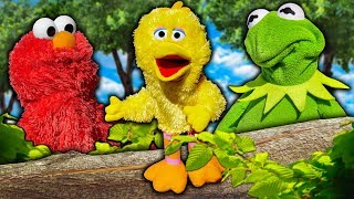 Kermit the Frog and Elmo Teach Big Bird How to Fly!