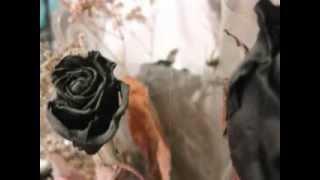 Watch Veljanov Empty Heart video