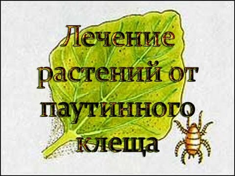 Лечение растений от паутинного клеща