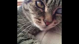New funny cats Vines Compilation (March)