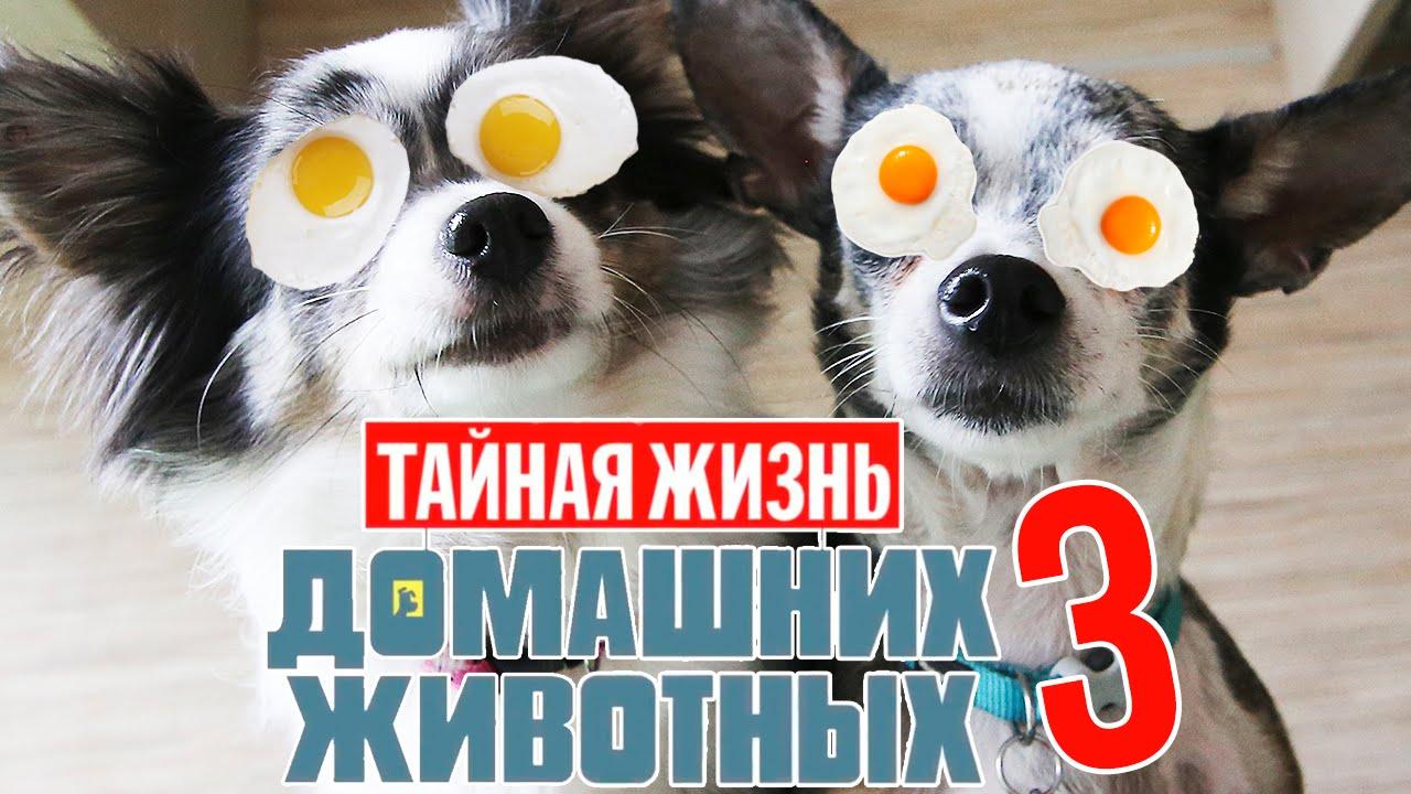 ТАЙНАЯ ЖИЗНЬ ДОМАШНИХ ЖИВОТНЫХ ПО-РУССКИ | 3 СЕРИЯ